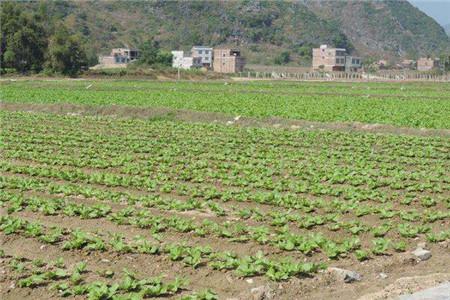 农村土地确权的意义有哪些